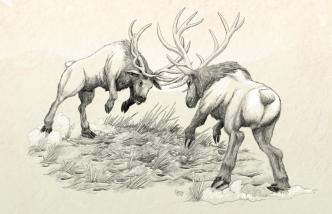 Elk on the Mountain